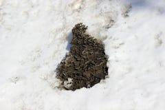 Un pedazo dentado pesado de nieve sucia negra en la superficie limpia blanca de la nieve fotografía de archivo