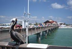 Un pelícano está disfrutando del día en el embarcadero de Clearwater en la Florida en April Day magnífica fotos de archivo