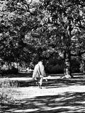 Un pellegrino cammina attraverso una foresta Fotografia Stock