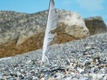 Un penacho plantado en la playa Imagen de archivo libre de regalías