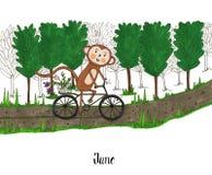 Un an pendant la vie d'un singe Lulu Photographie stock libre de droits