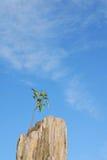 Un pequeño árbol crece en la roca Imagen de archivo