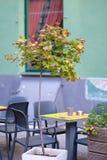 Un pequeño árbol de arce en un pote Foto de archivo libre de regalías