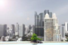 Un pequeño árbol del mangle en el área vacía de la arena, fondo del bosque Imagenes de archivo