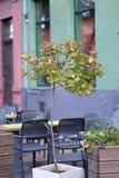 Un pequeño árbol en un pote Imágenes de archivo libres de regalías