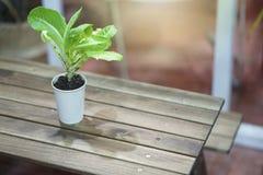 Un pequeño árbol en un pote blanco se coloca en una tabla fotografía de archivo libre de regalías