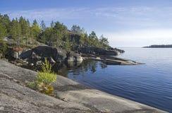 Un pequeño abedul en la orilla rocosa del lago Ladoga Foto de archivo libre de regalías