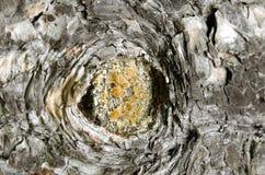Un pequeño agujero en la corteza de un árbol Imagen de archivo libre de regalías