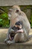 Un pequeño bebé del mono y su madre Foto de archivo libre de regalías