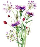 Un pequeño bouguet de las flores salvajes de la acuarela foto de archivo