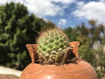 Un pequeño cactus dentro de un tarro quebrado imagen de archivo libre de regalías