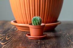 Un pequeño cactus se coloca en una tabla de madera fotos de archivo libres de regalías