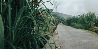 Un pequeño camino al pueblo y también, a los campos del arroz, el camino para los granjeros 2 - imagen de Indonesia Bali imagenes de archivo
