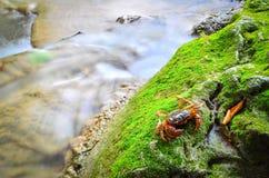 Un pequeño cangrejo Fotografía de archivo libre de regalías