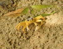 Un pequeño cangrejo en las zonas tropicales Foto de archivo libre de regalías
