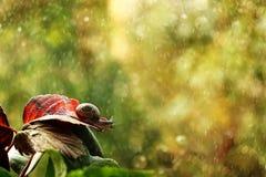 Un pequeño caracol en el amanecer debajo de una lluvia mira en un nuevo día fotos de archivo
