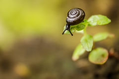 Un pequeño caracol en una cuchilla de la hierba mira abajo Imagen de archivo