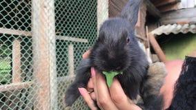 Un pequeño conejo en las manos de una mujer que come la hierba verde metrajes