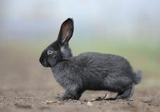 Un pequeño conejo que se sienta en la tierra Foto de archivo libre de regalías