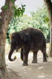 Un pequeño elefante melenudo Foto de archivo