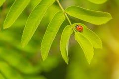 Un pequeño escarabajo que se arrastra en una flor Foto de archivo libre de regalías