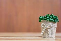 Un pequeño fondo del árbol fotografía de archivo libre de regalías