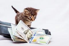 Un pequeño gatito cerca de un monedero con los dólares Primeras ganancias Él ` s foto de archivo