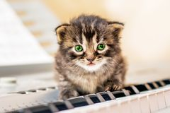 Un pequeño gatito con los ojos verdes se sienta en las llaves del piano learning imagen de archivo libre de regalías