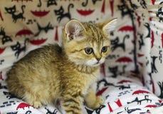 Un pequeño gatito en una tienda del animal doméstico Imagen de archivo libre de regalías