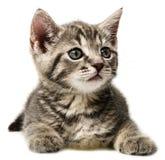Un pequeño gatito lindo en un fondo blanco Foto de archivo
