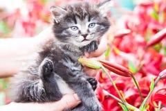 Un pequeño gatito mantuvo a mano el jardín en las flores Fotografía de archivo