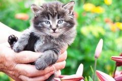 Un pequeño gatito mantuvo a mano el jardín en las flores Foto de archivo