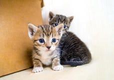 Un pequeño gatito Mercancías de la tienda para los gatos Refugio para los animales domésticos Protección Imágenes de archivo libres de regalías