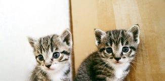 Un pequeño gatito Mercancías de la tienda para los gatos Refugio para los animales domésticos Protección Imagen de archivo libre de regalías