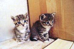 Un pequeño gatito Mercancías de la tienda para los gatos Refugio para los animales domésticos Protección Fotos de archivo