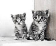 Un pequeño gatito Mercancías de la tienda para los gatos Refugio para los animales domésticos Protección Imagen de archivo
