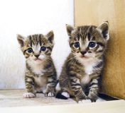 Un pequeño gatito Mercancías de la tienda para los gatos Refugio para los animales domésticos Protección Foto de archivo libre de regalías