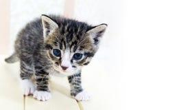 Un pequeño gatito Mercancías de la tienda para los gatos Refugio para los animales domésticos Protección Imagenes de archivo