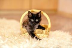 Un pequeño gatito negro que se sienta en la cesta y que mira adelante Fotos de archivo