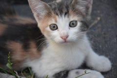 Un pequeño gatito precioso fotografía de archivo
