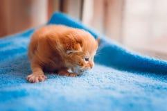 Un pequeño gatito rojo mira hacia fuera la ventana imágenes de archivo libres de regalías