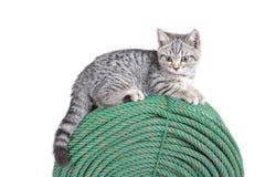 Un pequeño gatito se está sentando en una cuerda verde grande y un backgro blanco Fotos de archivo