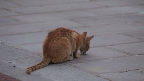 Un pequeño gatito sin hogar almacen de metraje de vídeo