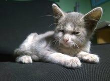 Un pequeño gatito soñoliento foto de archivo