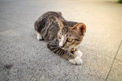 Un pequeño gato Imagenes de archivo