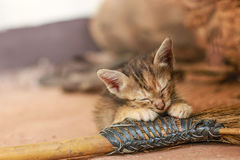 Un pequeño gato anaranjado Foto de archivo libre de regalías