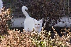Un pequeño gato blanco foto de archivo