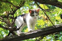 Un pequeño gato en un árbol Foto de archivo