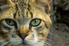 Un pequeño gato lindo, gato del amor, cierre para arriba Imagenes de archivo