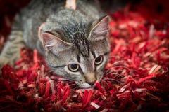 Un pequeño gato que mira en alguna parte imagen de archivo